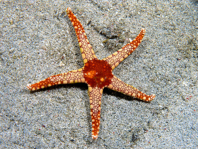 do echinoderms have a brain biology dictionary