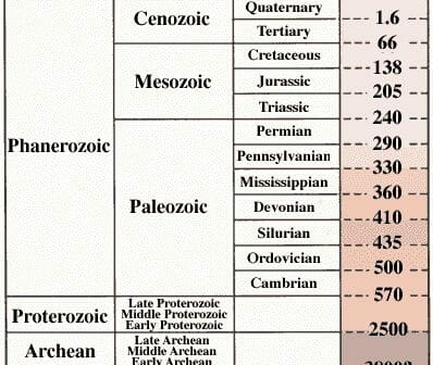 fossil record examples