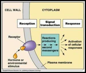 Signal Transduction Pathways Model