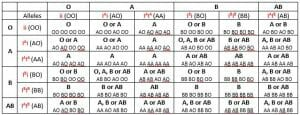 Blood group inheritance from parents to offspring