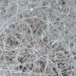 Hyphae vs. Mycelium