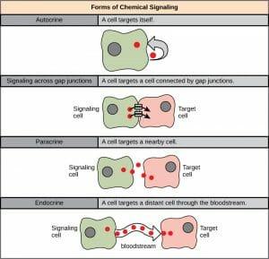 Chemical signaling