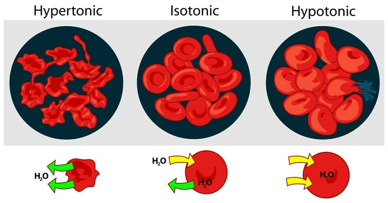 Osmotic pressure on blood cells diagram