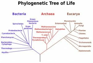 Phylogenetic tree scientific names