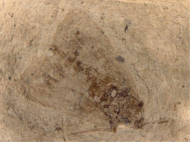 Paleolepidopterites destructus