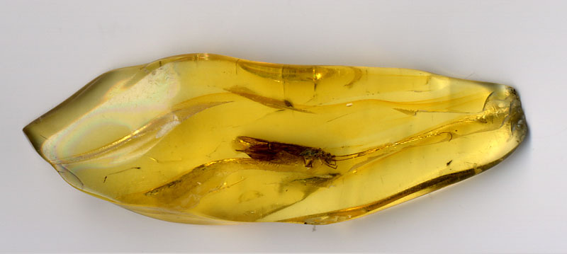 Preserved insect trapped in amber