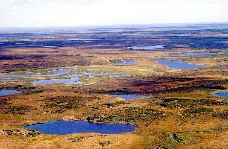 The Siberian Tundra