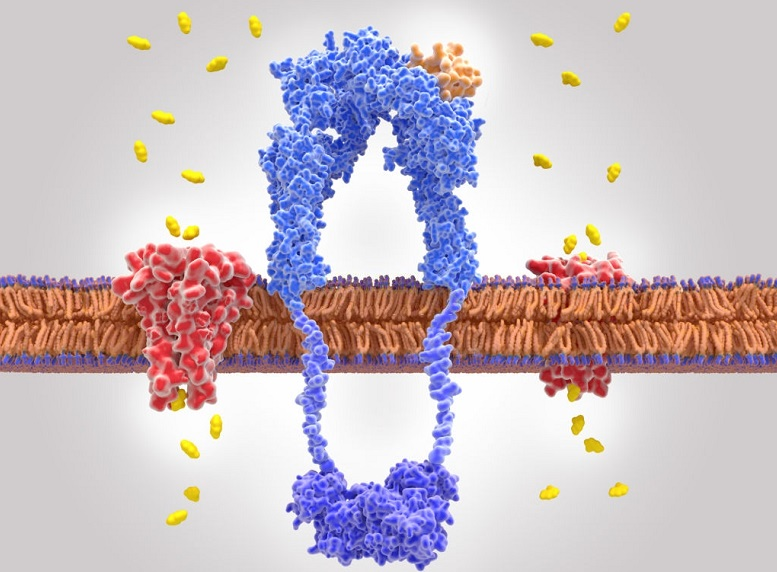 Cell membrane transporter proteins