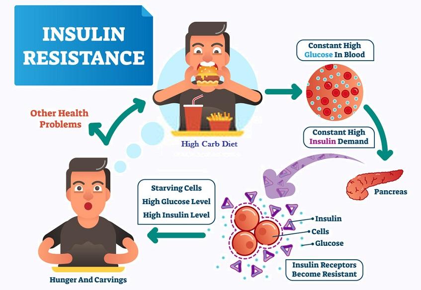Excess BCAAs - insulin resistance