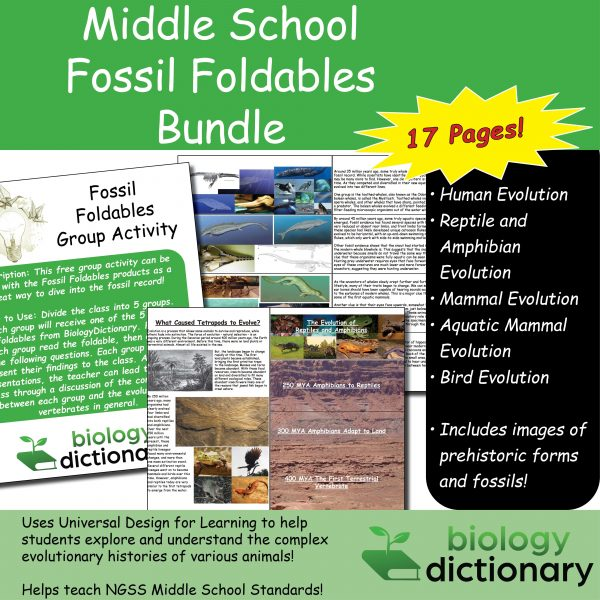 Fossil Foldables Featured Image