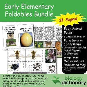Foldables Bundle (1st-2nd Grade)