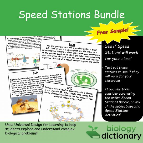 Speed Stations Gallery (Sample) Featured