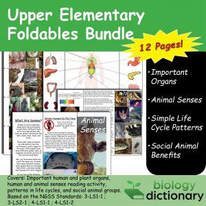 Foldables Bundle (3rd-5th Grade)