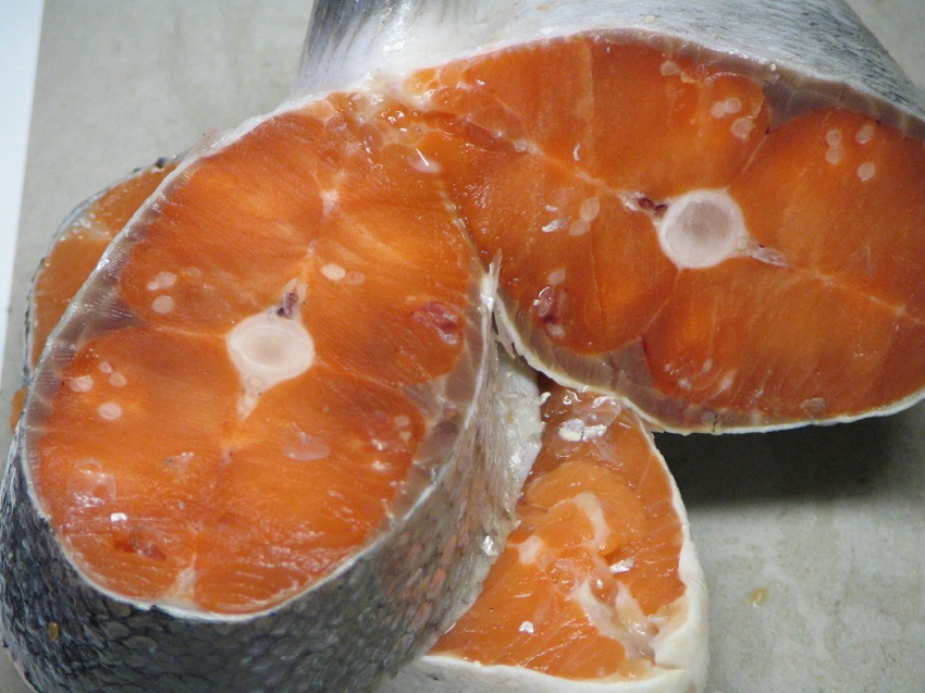 Parasitic Jellyfish seen as white blobs in salmon flesh.