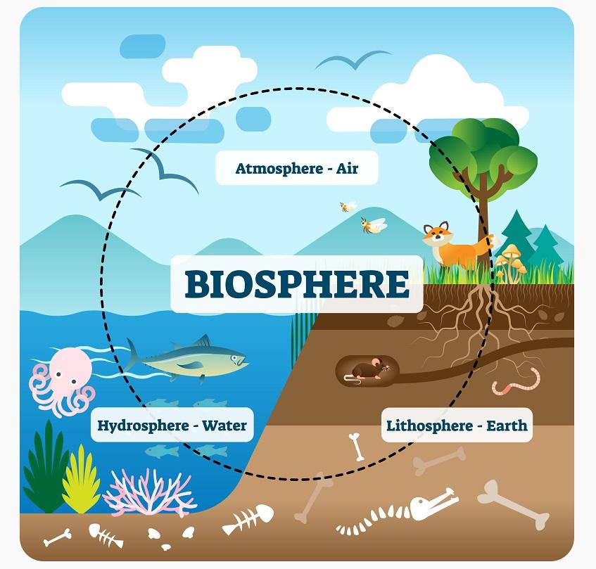 Biosphere illustration
