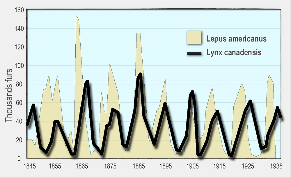 Populations of Lynx and Snowshoe Hares