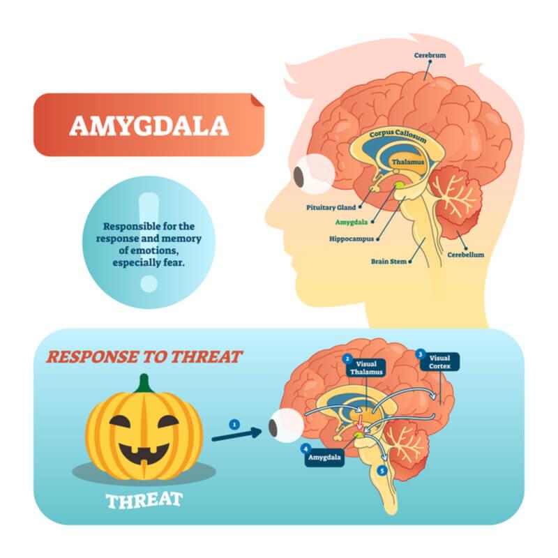 Amygdala localization in brain and step-wise processing to threatening jack-o-lantern