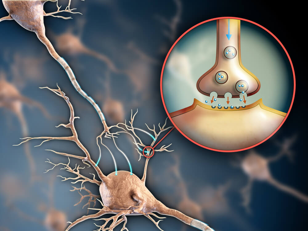 Illustration of two neurons communicating with a close-up detailing the synapse between neurons