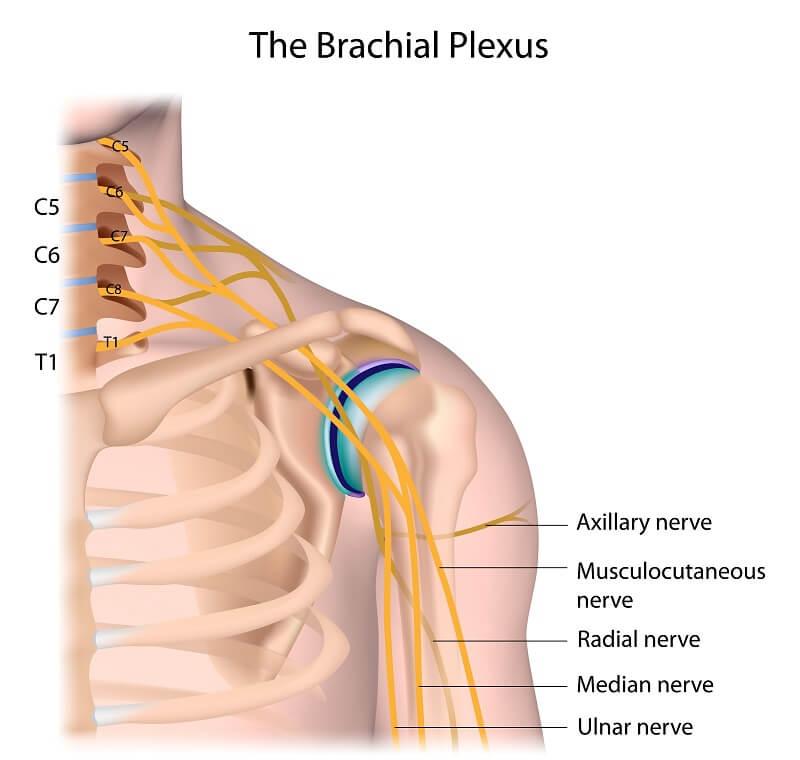 Ulnar nerve extending from the brachial plexus