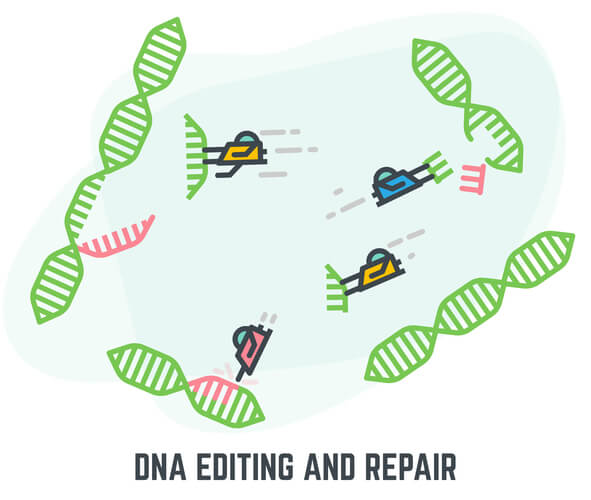 Cartoon of four repair proteins removing fixing red mistakes on four DNA segments
