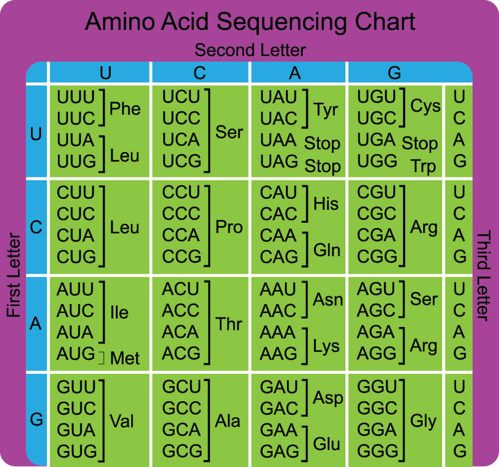 stop start codon amino acid sequence chart nucleotide bases