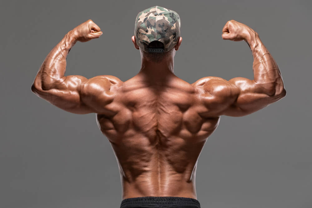 back muscles erector spinae latissimus dorsi trapezium