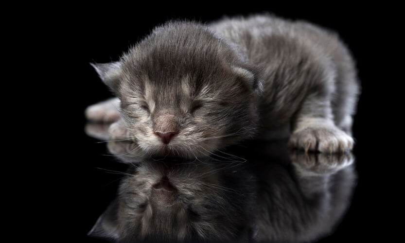 blind kitten occipital visual research