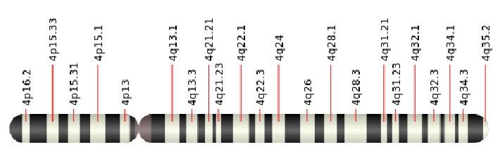 ideogram chromosome cytogenic location arm band