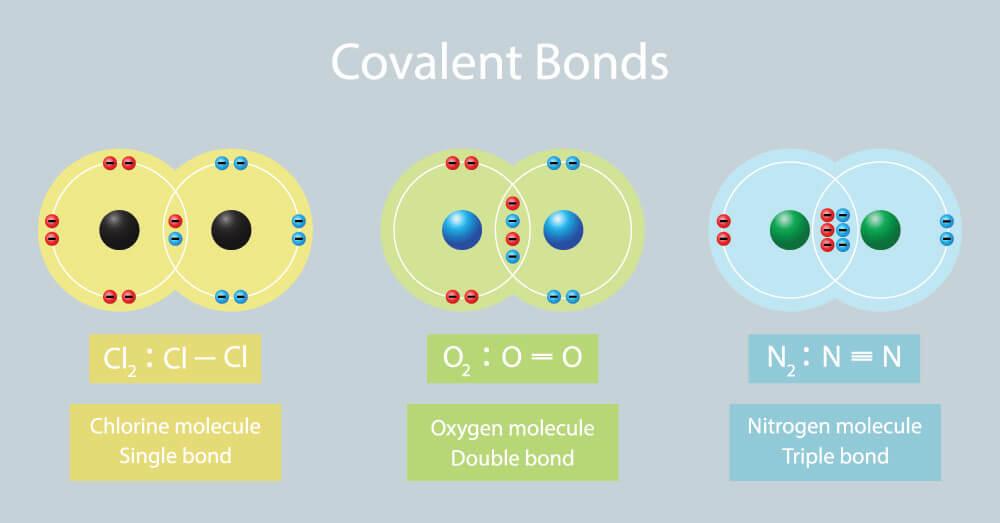 Covalent Bond Biology Dictionary