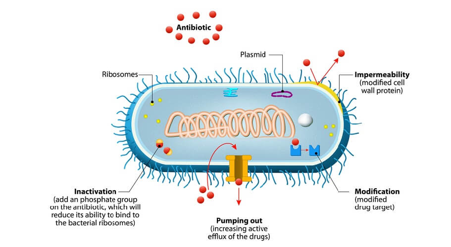 antibiotic resistance mibrobe prokaryote mrsa