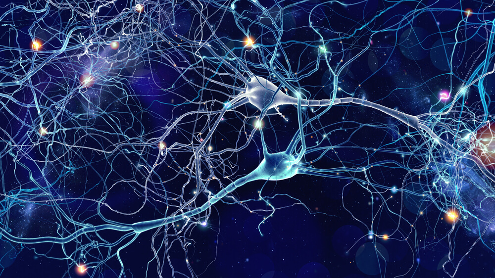 broca's area neurons nerve cells network