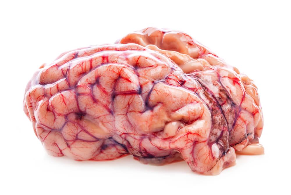 broca's area gyrus gyri brain folds
