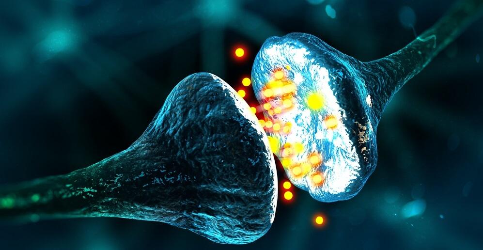 synapse neurotransmission neurotransmitters glia glial cells nerve neuron