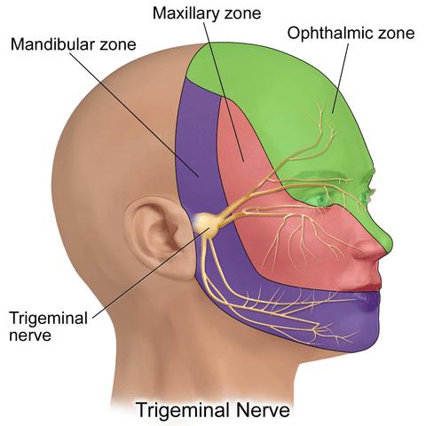 trigeminal branches anatomy cranial nerve dermatome