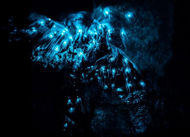 Glowworms in Waipu Cave