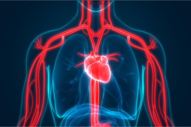Pulmonary Veins