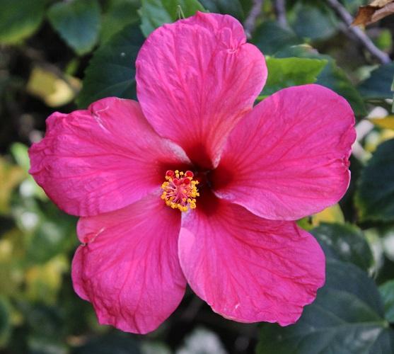 actinomorphic flower petals radial symmetry