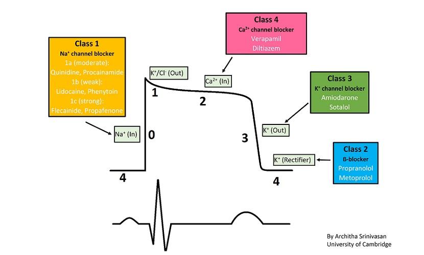 cardiac action potential sa node pacemaker cells