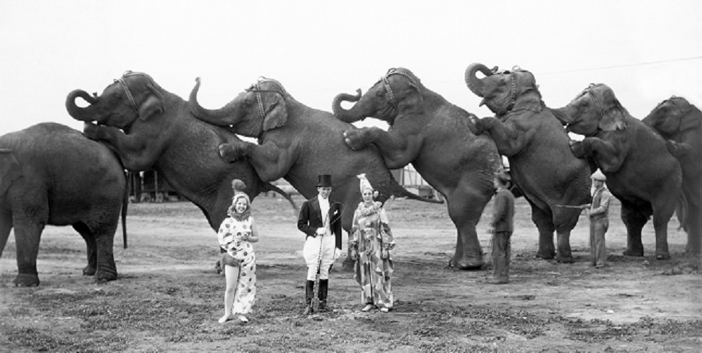 operant conditioning reward punishment circus animals