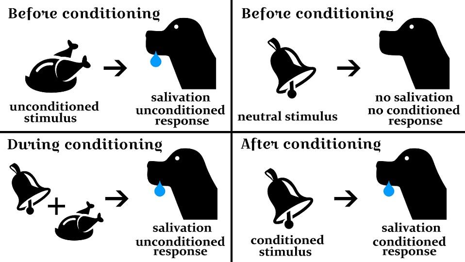 pavlov's dog classical conditioning pavlovian