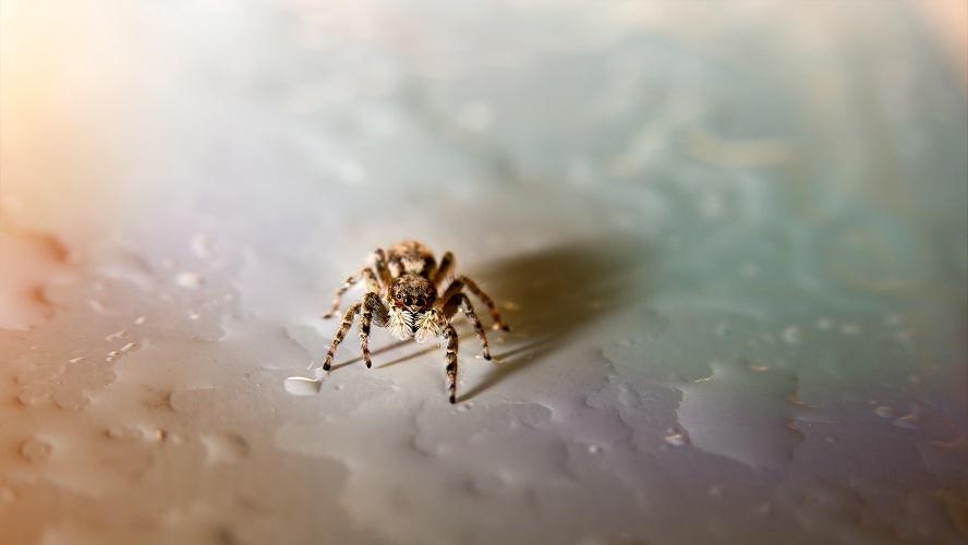 spider arachnophobia fear response