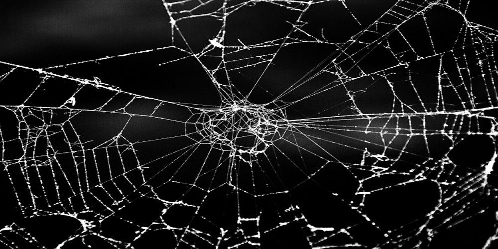 spider web arachnohobia fear response