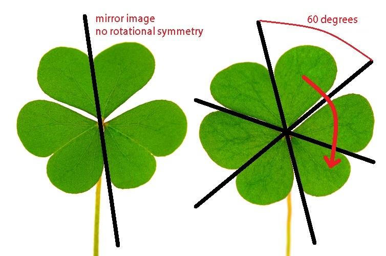 three leaf clover bilateral radial symmetry planes