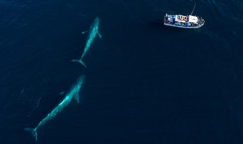 whales zoology size length comparison
