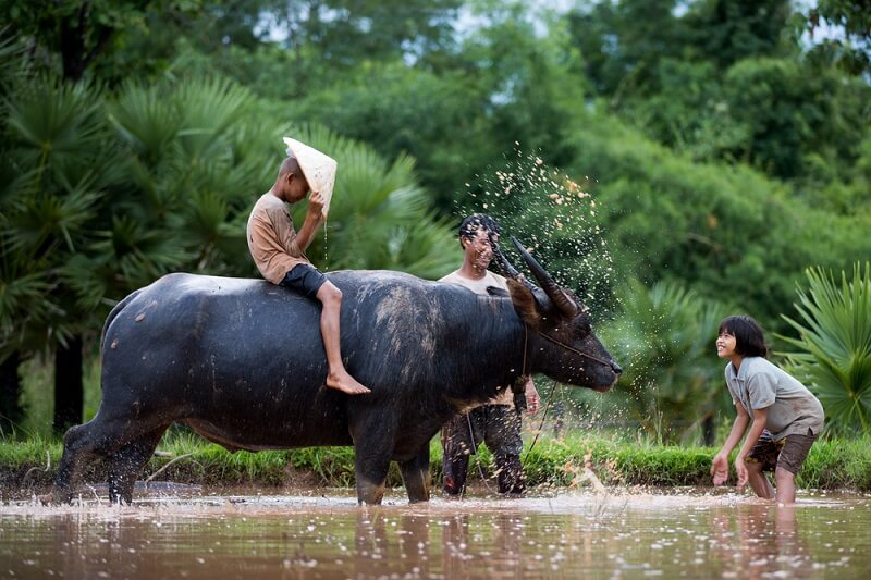 A family splashes water playfully with their domestic water buffalo, who seems to be enjoying it.