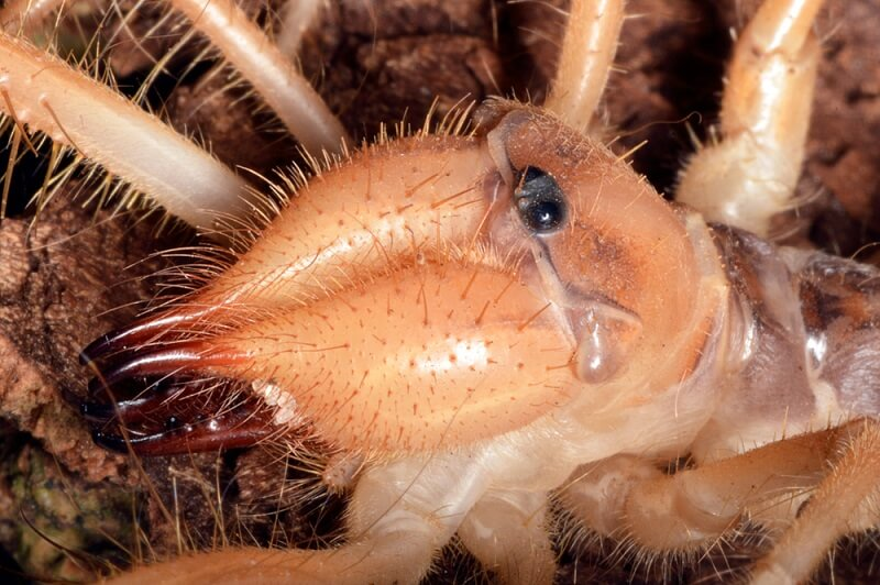 Though camel spiders may look scary, they are actually mostly harmless.