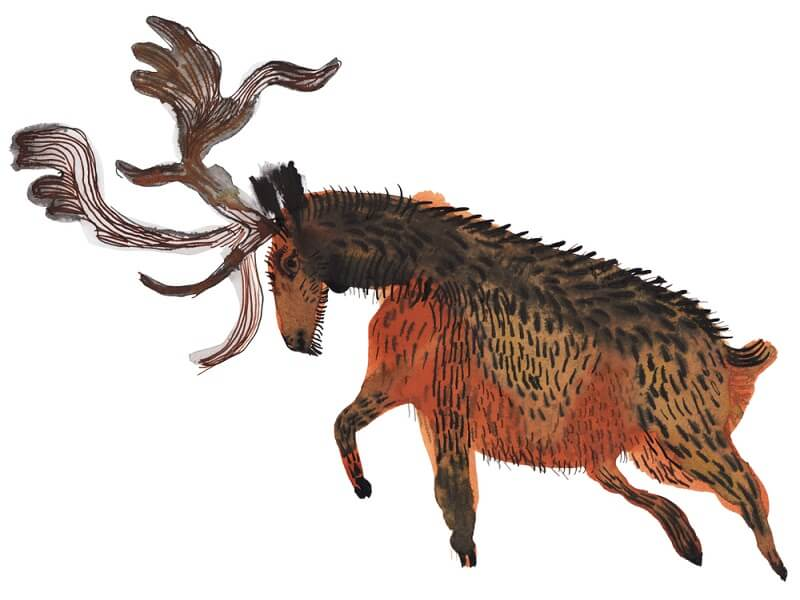 Irish elk are commonly depicted in cave paintings and other early-human works of art, signifying its importance to those cultures.