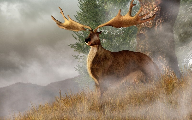 An artist's depiction of the extinct Irish elk shows the giant creature in its natural habitat.