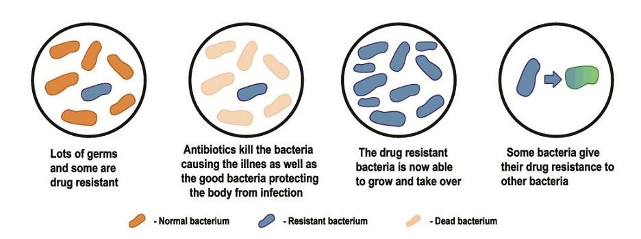 antibiotic resistance drug bacteria