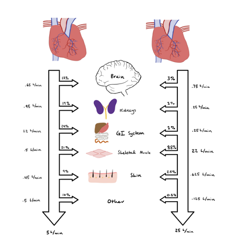 cardiac output pressure arteries veins